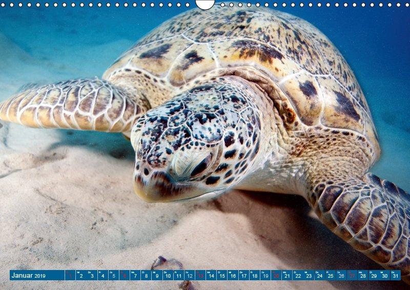 01 Januar Unterwasserkalender Sven Gruse taucht ab! Fische kalt erwischt 2019