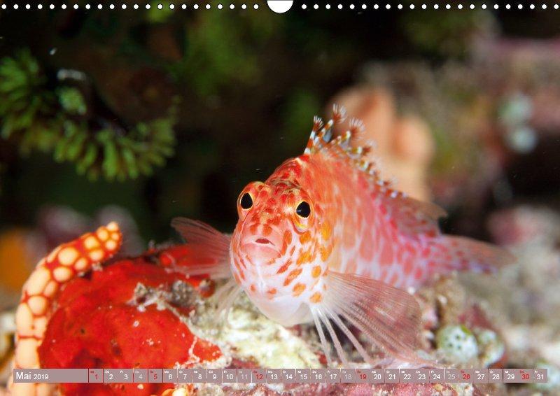 05 Mai Unterwasserkalender Sven Gruse taucht ab! Fische kalt erwischt 2019