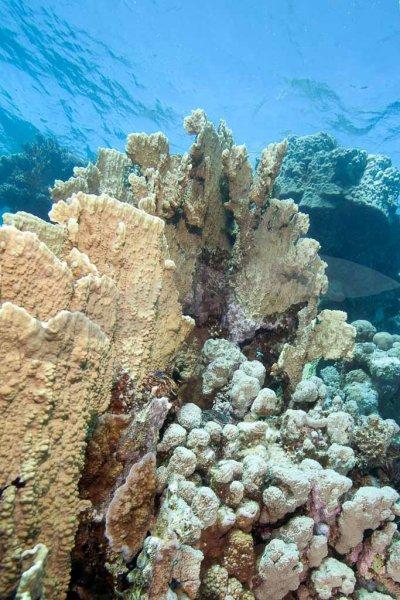 Soma Bay Ägypten-3