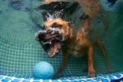Hunde unter Wasser (1 of 2)