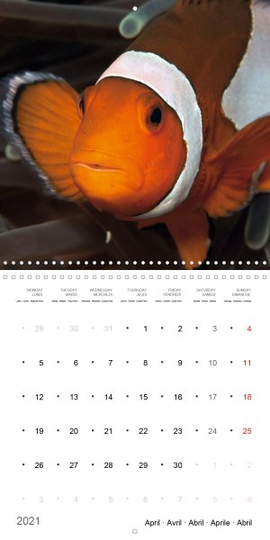 202104_Calender_2021_underwater_My_home_is_my_castle_Clownfish_april
