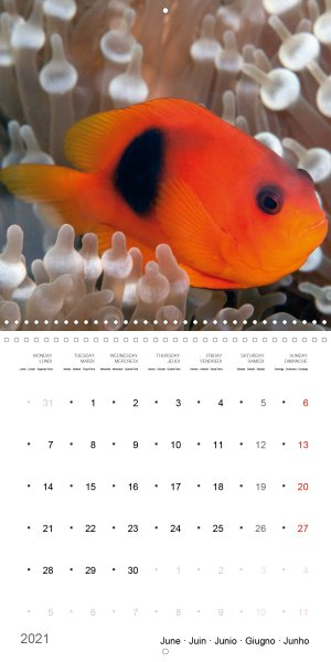 202106_Calender_2021_underwater_My_home_is_my_castle_Clownfish_june