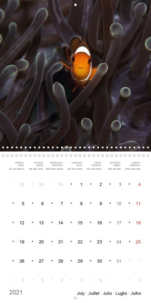 202107_Calender_2021_underwater_My_home_is_my_castle_Clownfish_july
