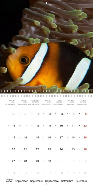 202109_Calender_2021_underwater_My_home_is_my_castle_Clownfish_september
