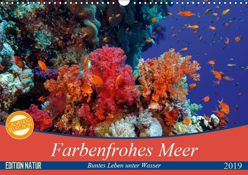 00 Cover Unterwasserkalender Farbenfrohes Meer 2019