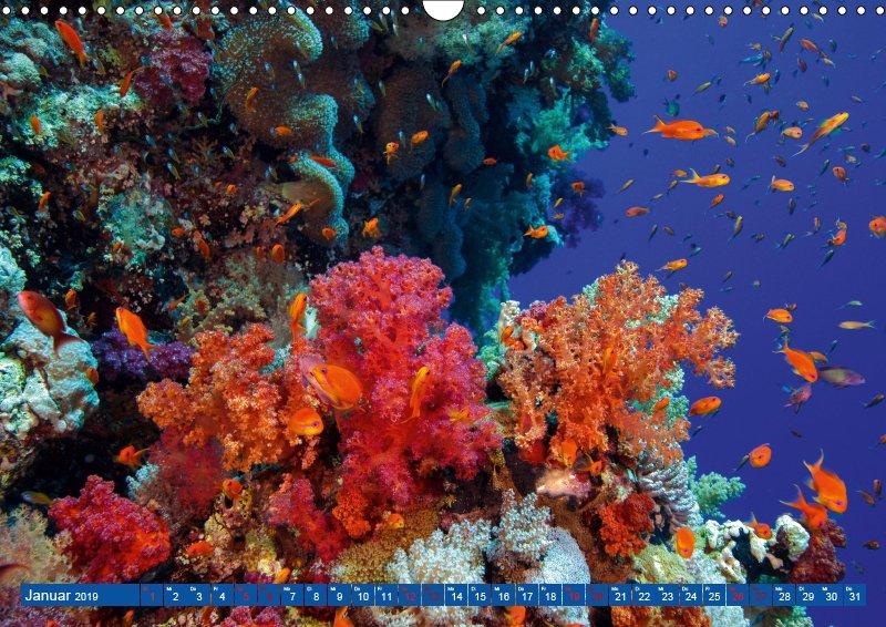 01 Januar Unterwasserkalender Farbenfrohes Meer 2019