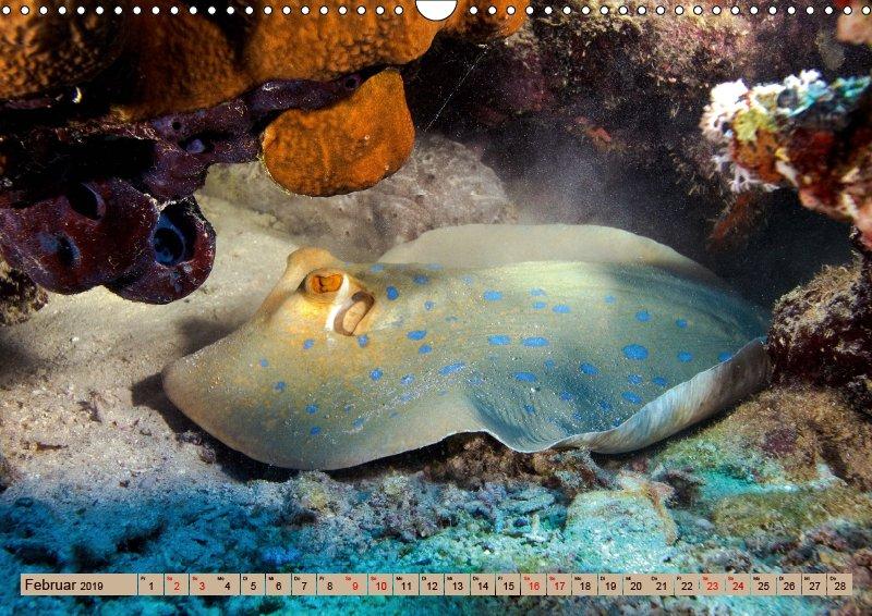 02 Februar Unterwasserkalender Farbenfrohes Meer 2019