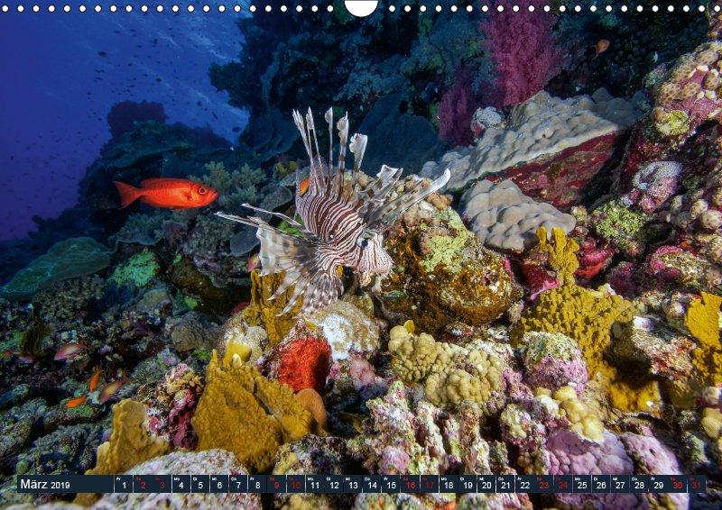 03 März Unterwasserkalender Farbenfrohes Meer 2019