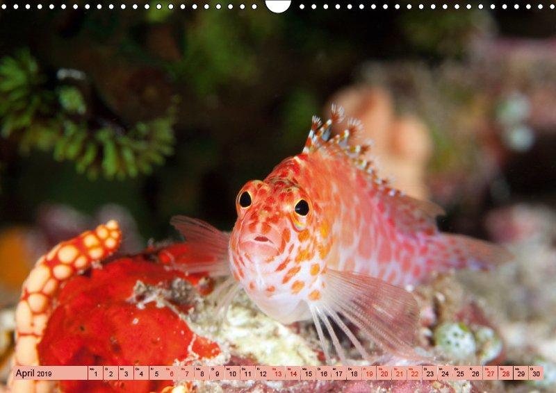 04 April Unterwasserkalender Farbenfrohes Meer 2019