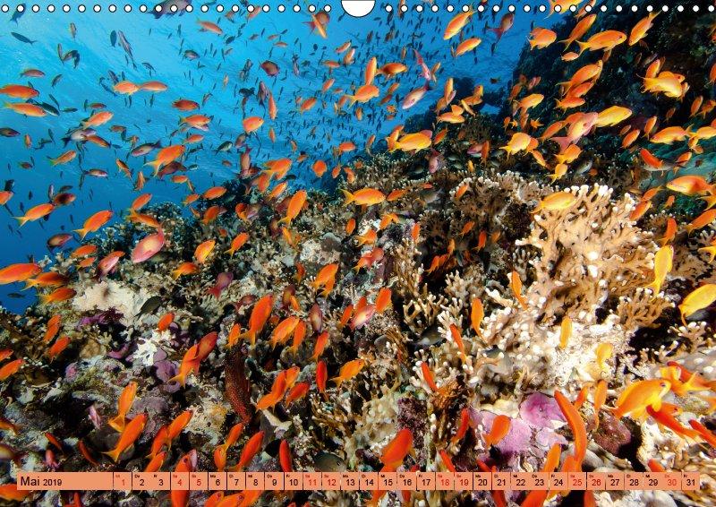 05 Mai Unterwasserkalender Farbenfrohes Meer 2019
