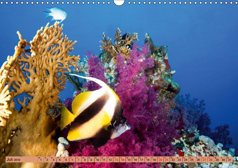07 Juli Unterwasserkalender Farbenfrohes Meer 2019