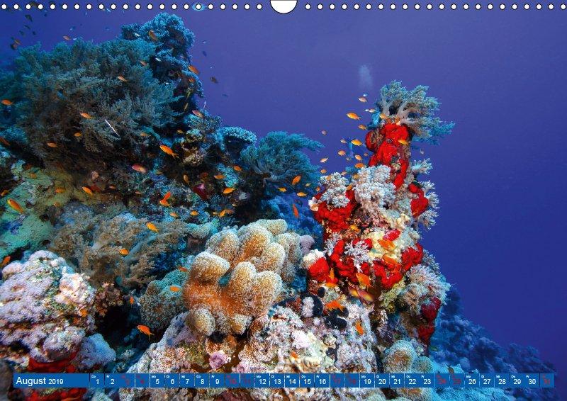 08 August Unterwasserkalender Farbenfrohes Meer 2019