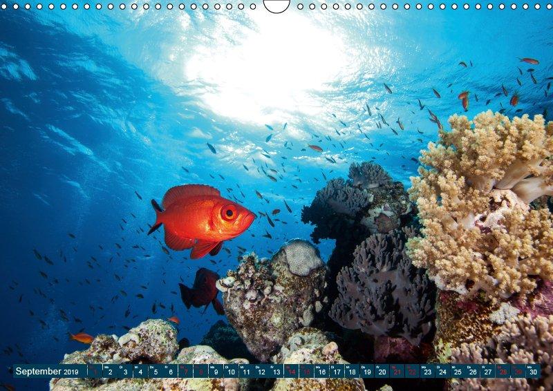 09 September Unterwasserkalender Farbenfrohes Meer 2019