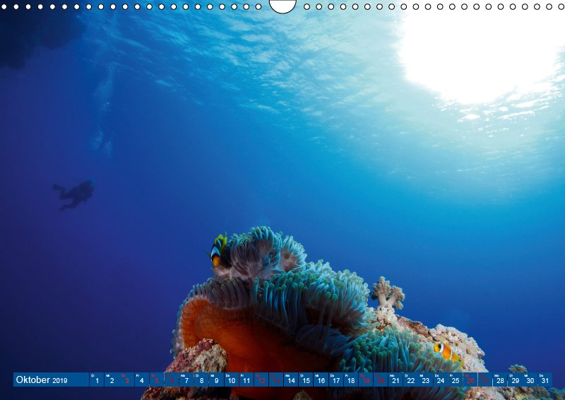 10 Oktober Unterwasserkalender Farbenfrohes Meer 2019