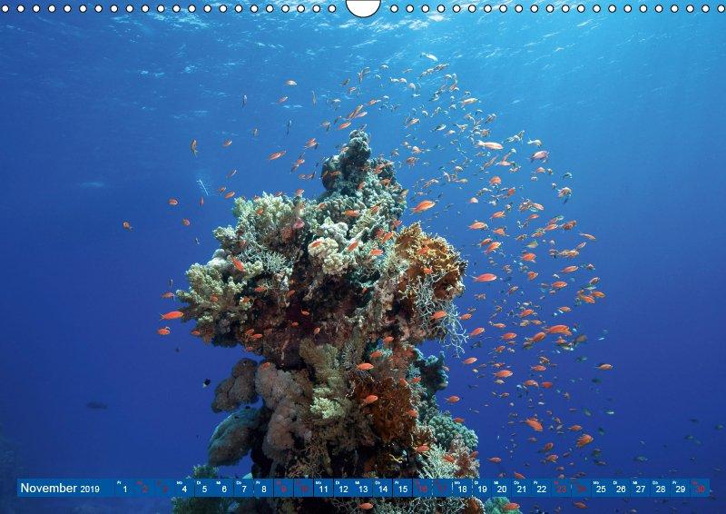 11 November Unterwasserkalender Farbenfrohes Meer 2019