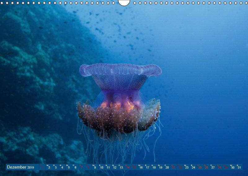 12 Dezember Unterwasserkalender Farbenfrohes Meer 2019