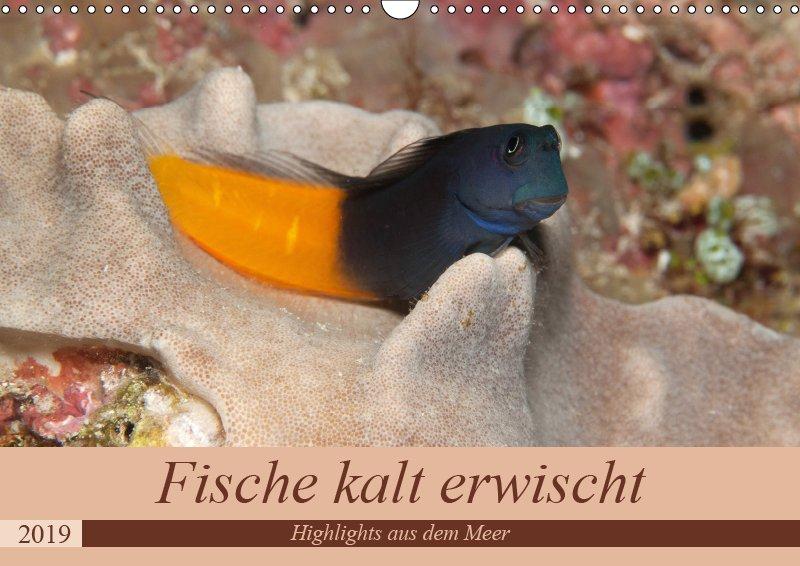 00 Cover Unterwasserkalender Sven Gruse taucht ab! Fische kalt erwischt 2019