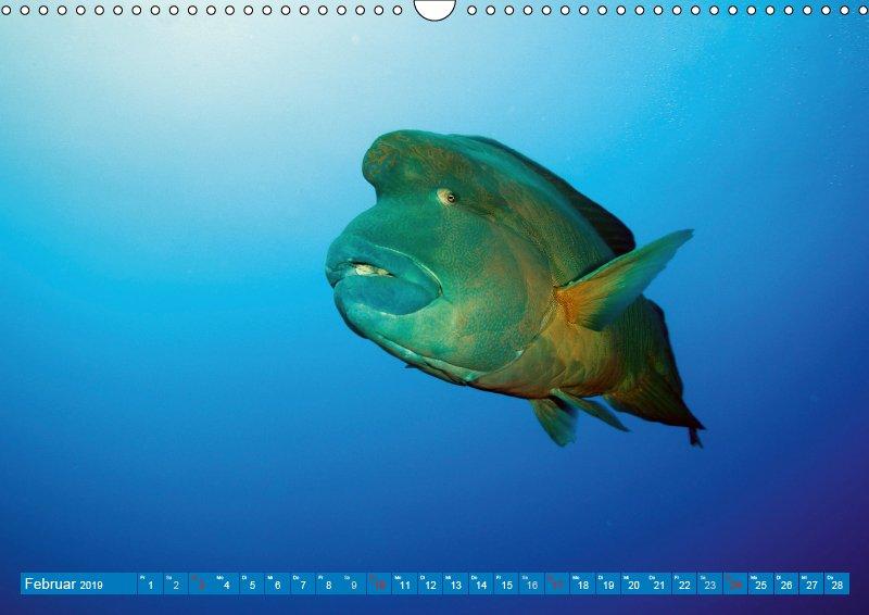 02 Februar Unterwasserkalender Sven Gruse taucht ab! Fische kalt erwischt 2019