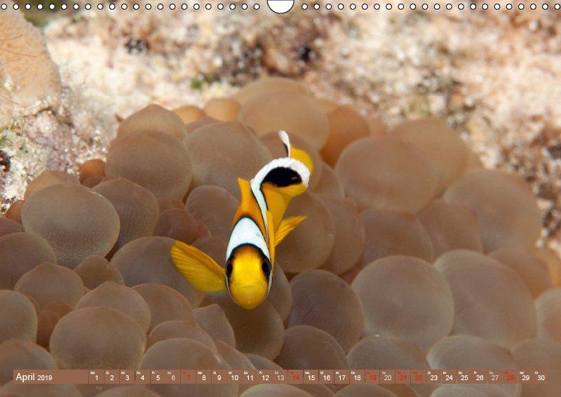 04 April Unterwasserkalender Sven Gruse taucht ab! Fische kalt erwischt 2019