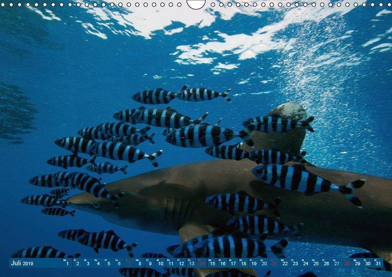 07 Juli Unterwasserkalender Sven Gruse taucht ab! Fische kalt erwischt 2019