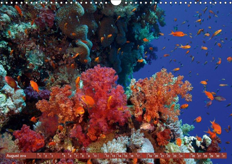 08 August Unterwasserkalender Sven Gruse taucht ab! Fische kalt erwischt 2019