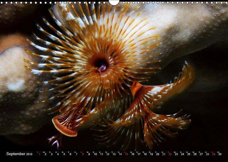 09 September Unterwasserkalender Sven Gruse taucht ab! Fische kalt erwischt 2019