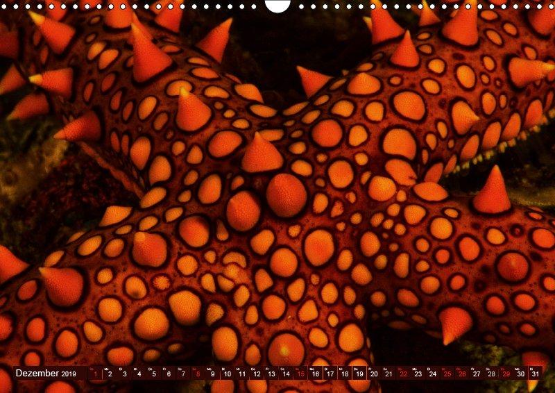 12 Dezember Unterwasserkalender Sven Gruse taucht ab! Fische kalt erwischt 2019