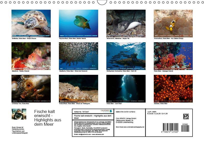 13 Index Unterwasserkalender Sven Gruse taucht ab! Fische kalt erwischt 2019