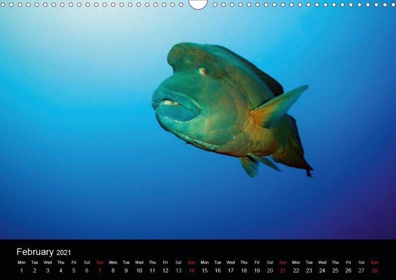 202102_underwater_calender_fishshooting_2021_february