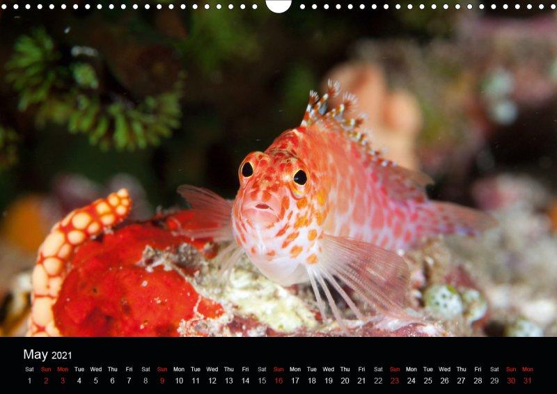 202105_underwater_calender_fishshooting_2021_may