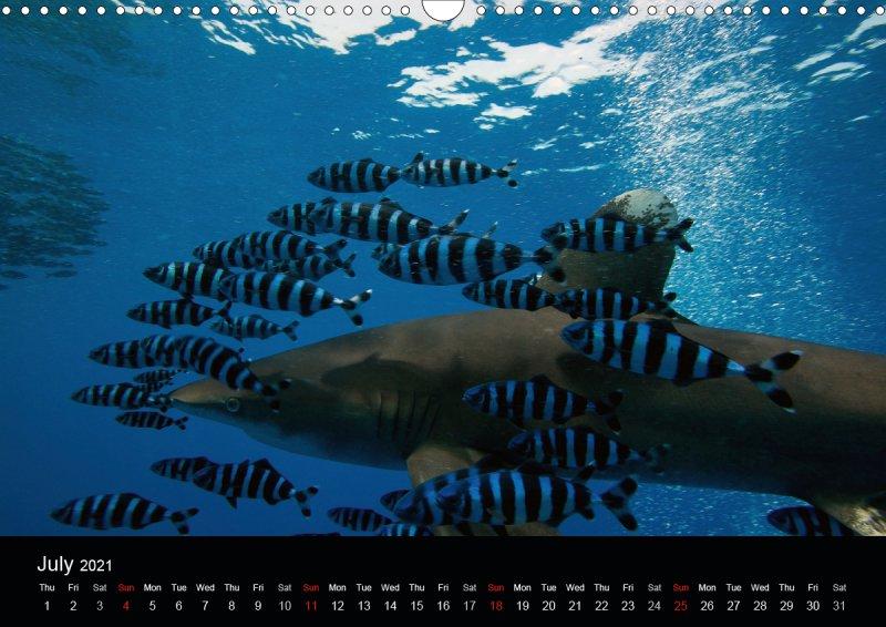 202107_underwater_calender_fishshooting_2021_july