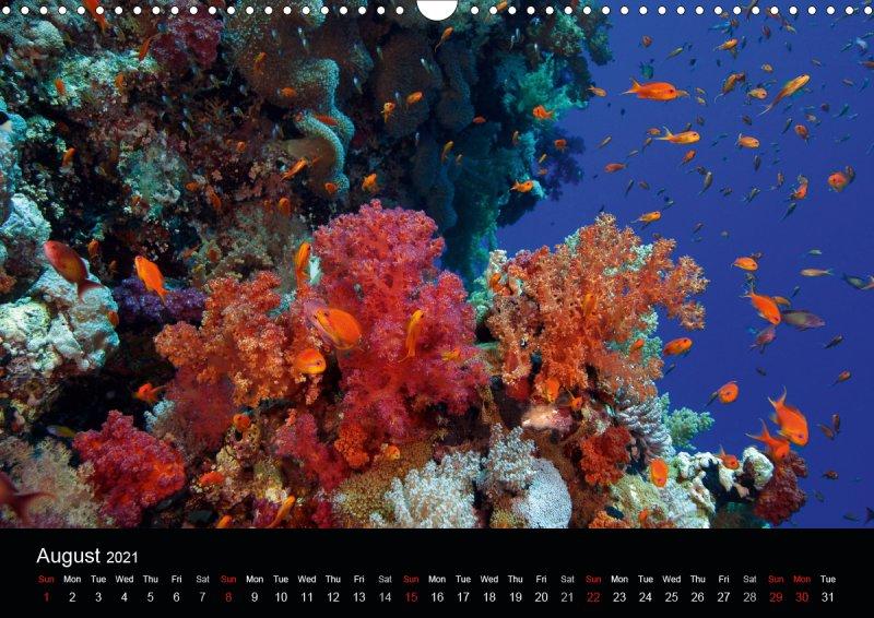 202108_underwater_calender_fishshooting_2021_august