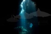 Höhle Rotes Meer (2)