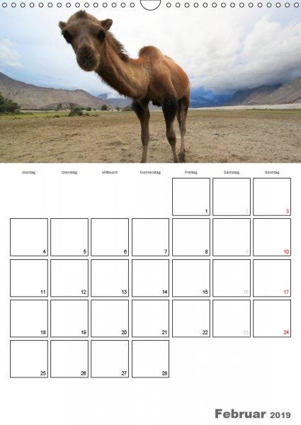 02 Februar Familienplaner Kamelporträt 2019