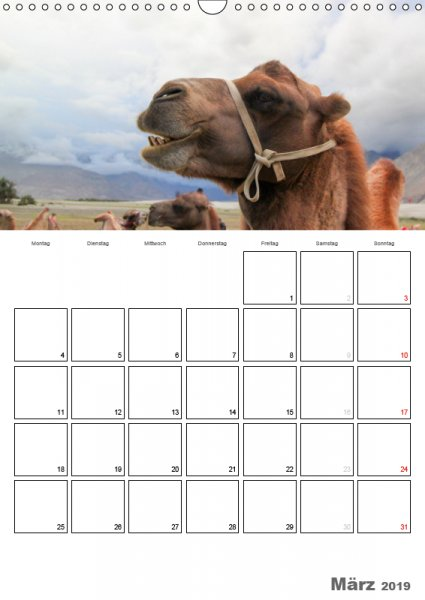 03 März Familienplaner Kamelporträt 2019
