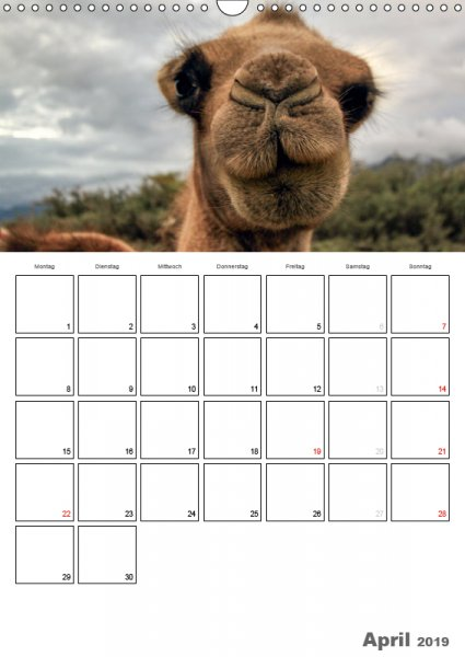 04 April Familienplaner Kamelporträt 2019