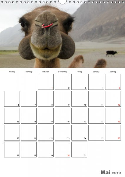 05 Mai Familienplaner Kamelporträt 2019