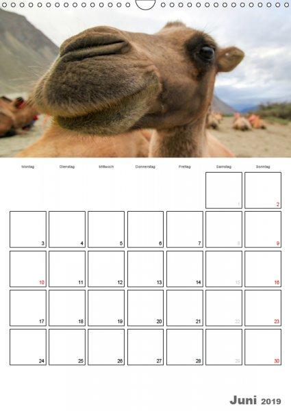 06 Juni Familienplaner Kamelporträt 2019
