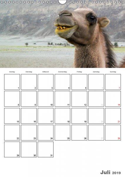 07 Juli Familienplaner Kamelporträt 2019