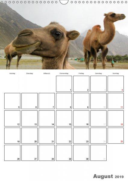 08 August Familienplaner Kamelporträt 2019