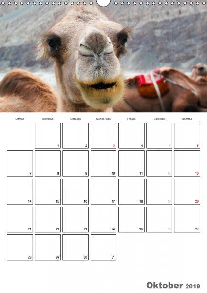 10 Oktober Familienplaner Kamelporträt 2019