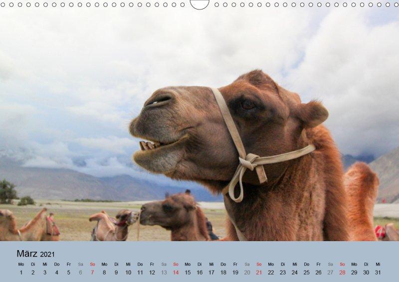 202103_Tierkalender_Kamel_Portraet_Maerz