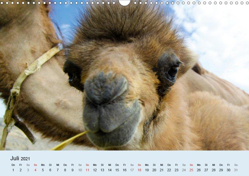 202107_Tierkalender_Kamel_Portraet_Juli