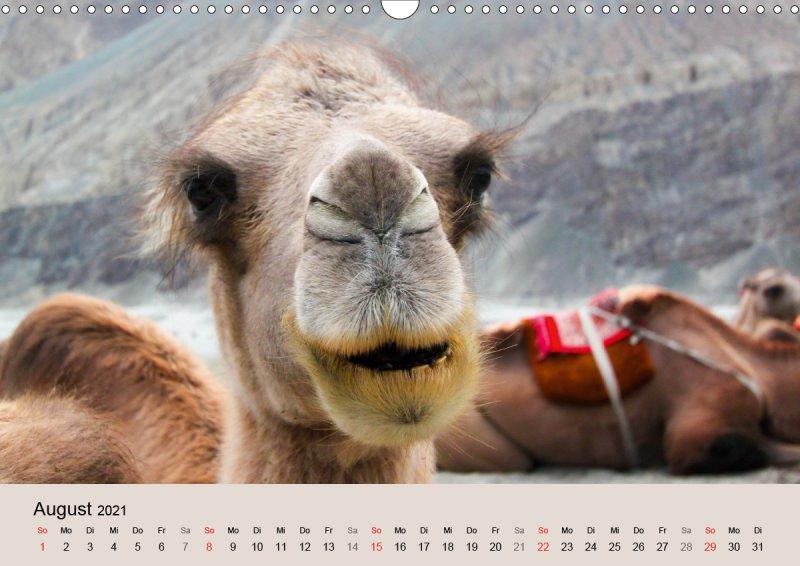 202108_Tierkalender_Kamel_Portraet_August