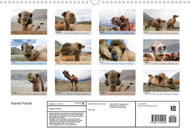 202113_Tierkalender_Kamel_Portraet_index
