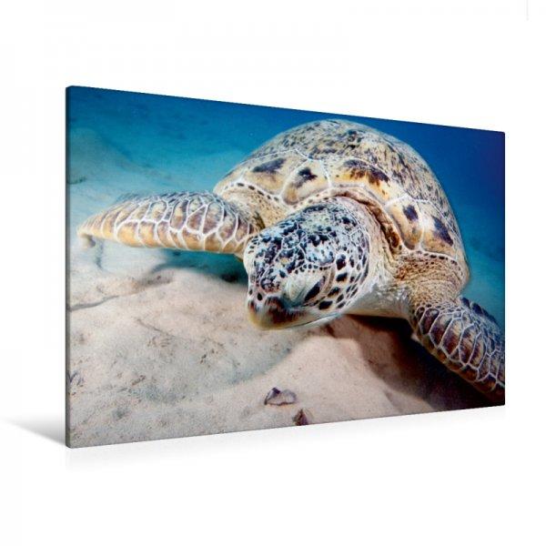 Unterwasserschildkröte Leinwand