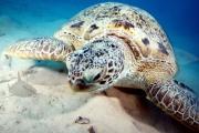 Schildkröte (2)