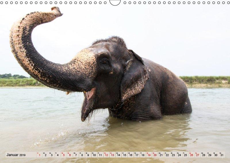01 Januar Tierkalender Tierisches aus Asien 2019
