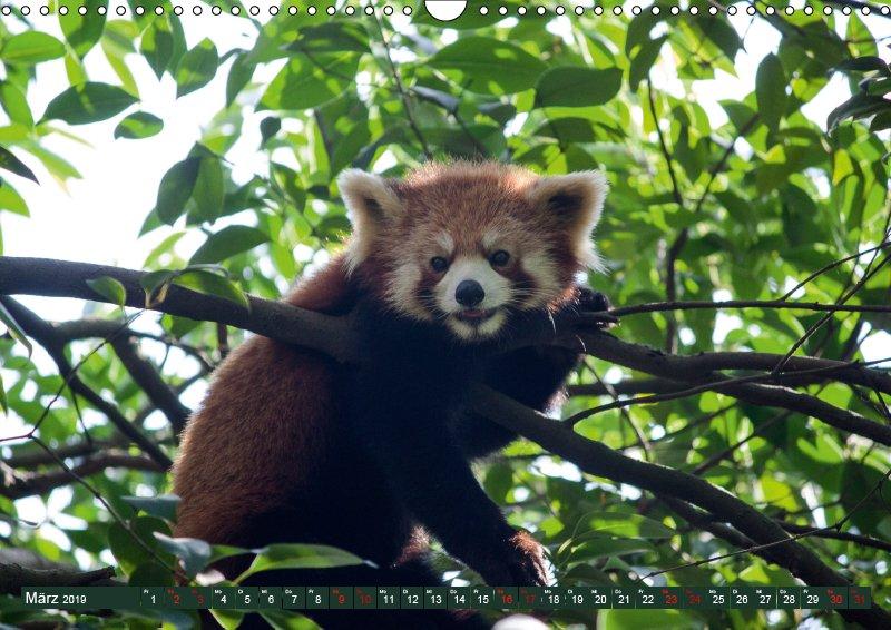 03 März Tierkalender Tierisches aus Asien 2019