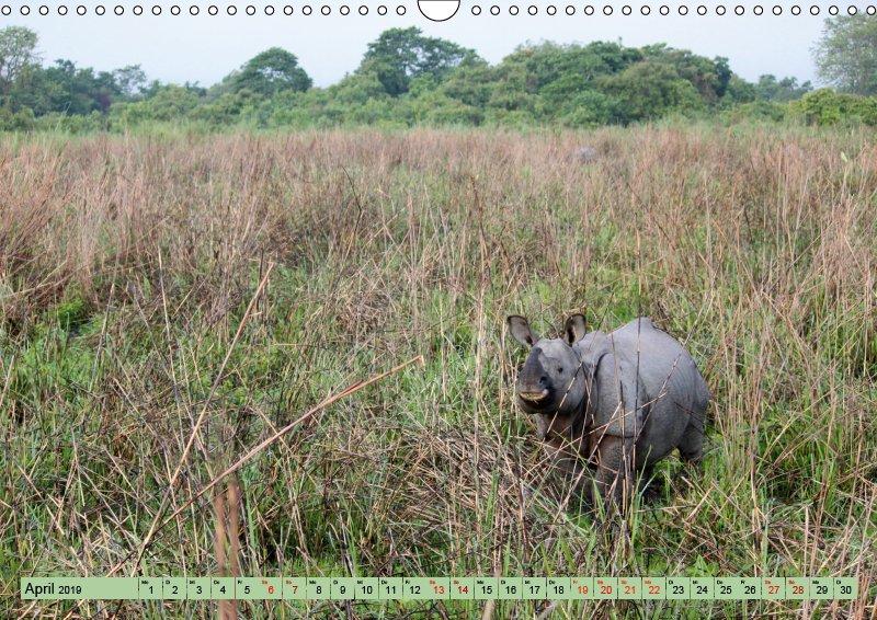 04 April Tierkalender Tierisches aus Asien 2019